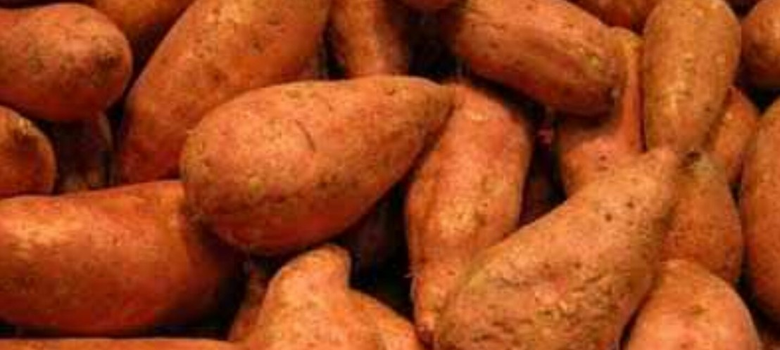 Yogaholics Nutrition – Sweet Potatoes